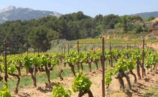vignoble d'irouleguy au pays basque